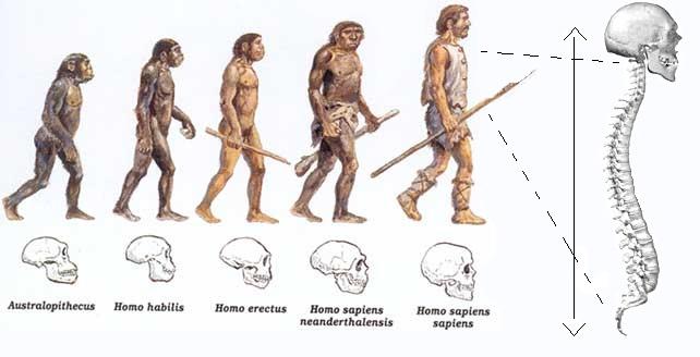 evolucao_humana3
