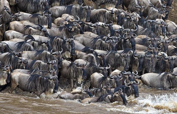 GNU+wildebeest- (1)