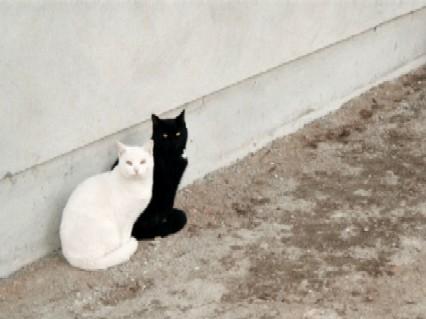 gato_preto_e_branco3