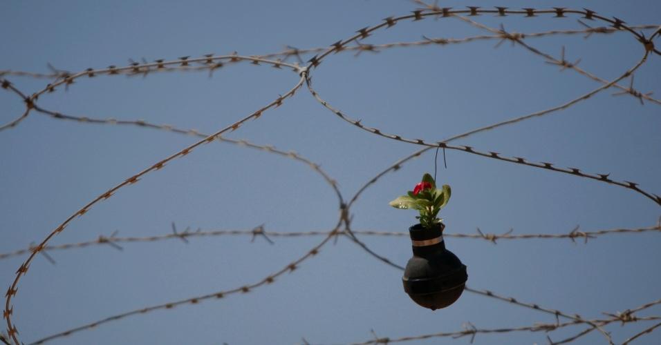 02out2013---uma-bomba-de-gas-lacrimogeneo-com-uma-flor-plantada-pendurada-no-arame-farpado-na-aldeia-de-bilin-perto-da-cidade-de-ramallah-na-cisjordania-1380732881521_956x500