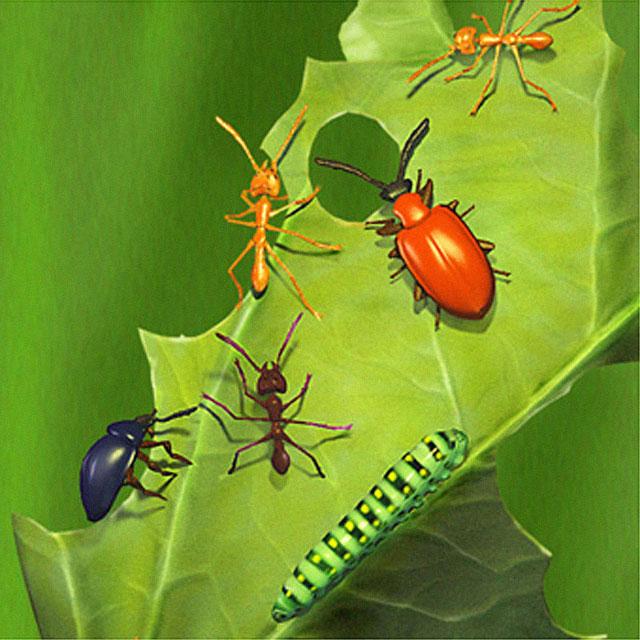 insetos_bg