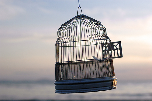 dc-open-bird-cage (1)
