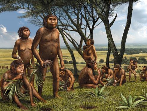 hominiids1