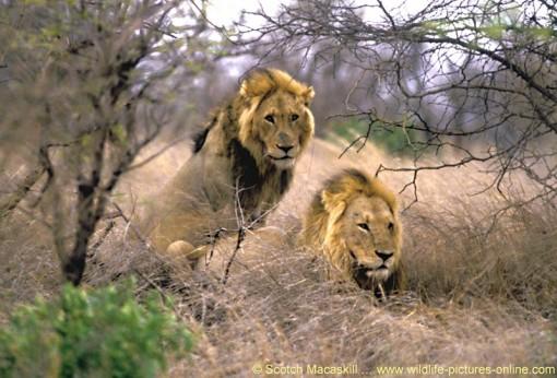animais-africanos3