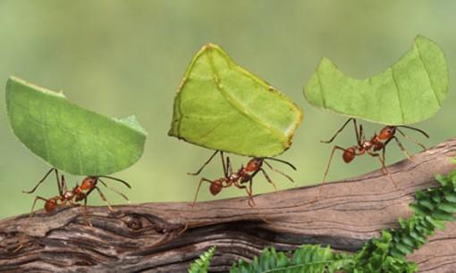 como_funcionam_formigas