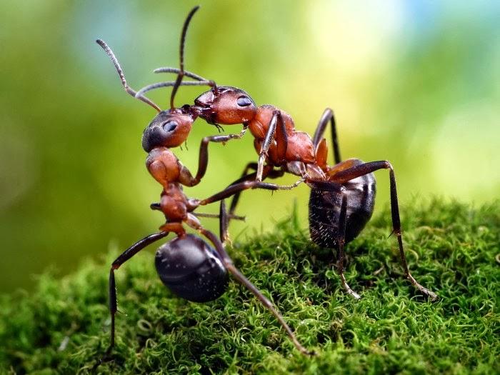 Formigas para criar contos de fadas fotógrafo Russo Andrey Pavlov blog Luiz Lucas Trajano de Menezes