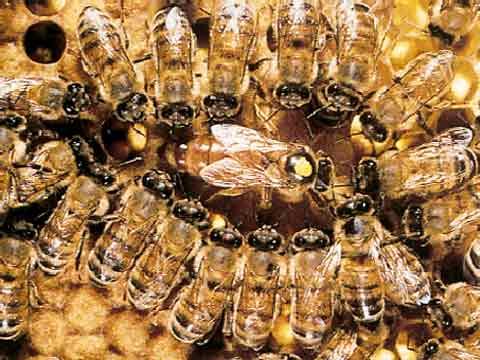 abelhas-sao-indicadoras-de-poluicao-no-ambiente-1