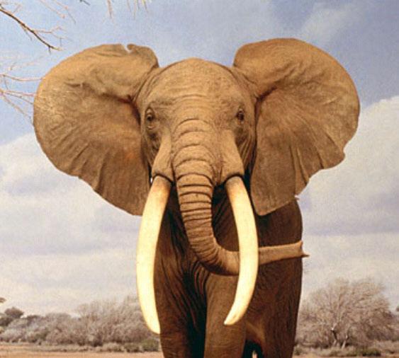 elefantes-comuns-3