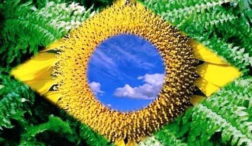 Ou muda a bandeira, ou não teremos inovação no Brasil!