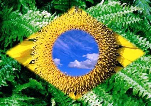 fotos-fotos-da-bandeira-do-brasil-129a25