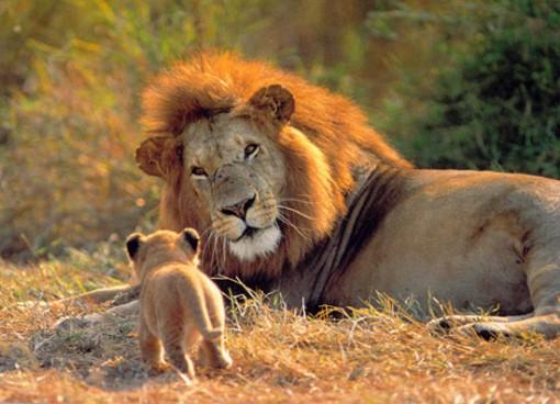 os-leoes