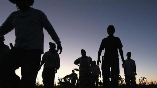 migrantes-en-pastizal