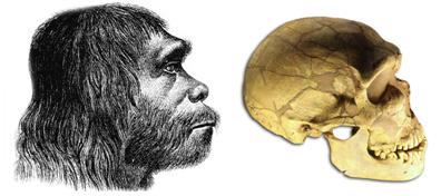 homo-sapiens-neanderthalens