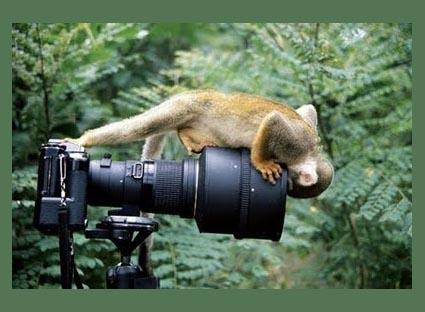 macaco-olha-camera.JPG