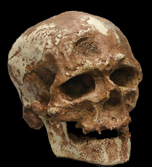 produto-cro-magnon-(homo-sapiens)--21-1