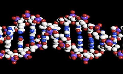 Moléculas Cognitivas