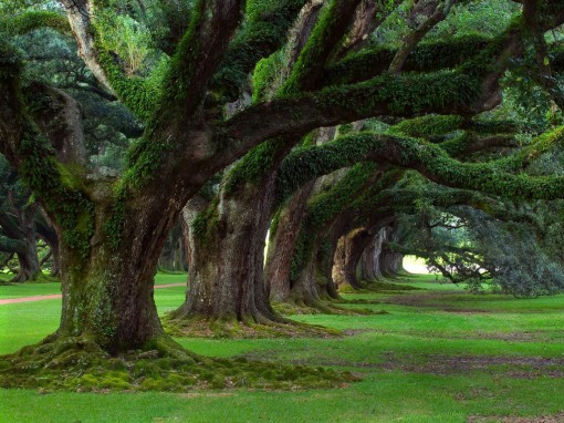 O_mundo_das_árvores