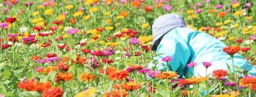 cuidando-jardim