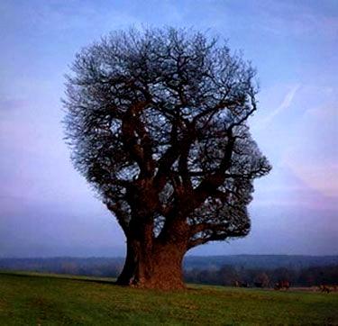 tree-head