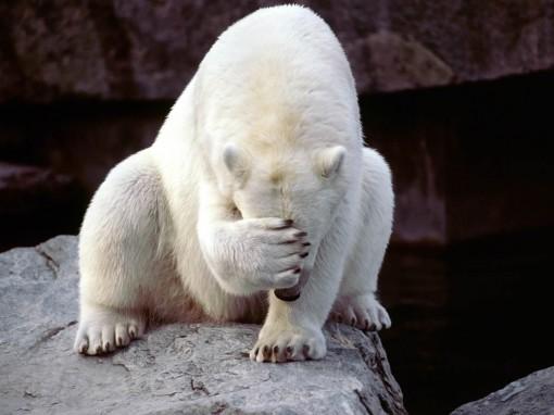 urso-com-vergonha-5c701