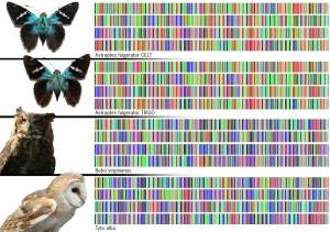 020175100112-dna-barcoding