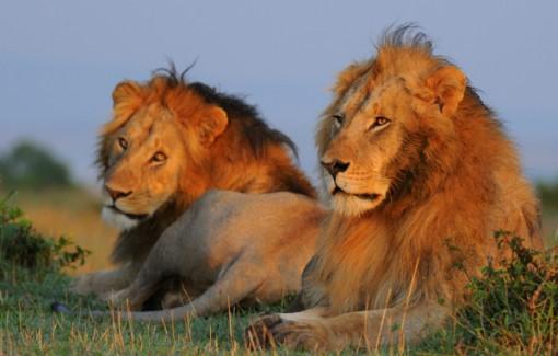 homossexualidade-animais-praticam