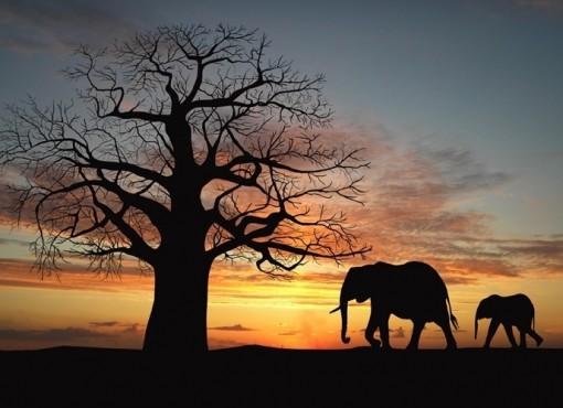 quenia-e-impossivel-deixar-o-pais-africano-de-fora-da-lista-quando-se-trata-de-animais-selvagens-o-dificil-porem-e-escolher-um-so-lugar-dentre-os-diversos-parques-nacionais-para-uma-experiencia-1381779156054_688x500