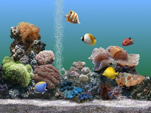 343482-aquario1
