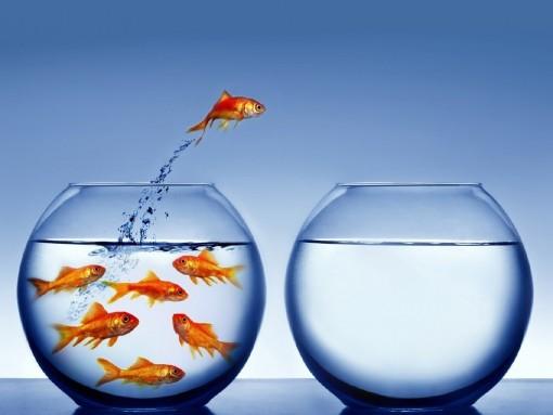 peixes-no-aquario-lotado